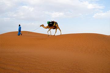 מרוקו סהרה
